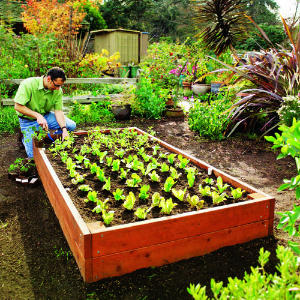 Diy Raised Redwood Bed How To Hope Gardens
